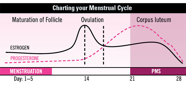 Charting your menstrual cycle