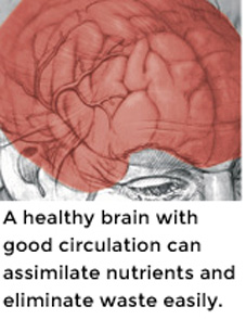 A healthy brain with good circulation can assimilate nutrients and eliminate waste easily.
