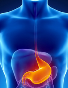 Digestive Tonic - How It Works