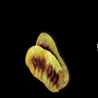 Senna Leaf and Pod